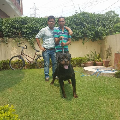 Mr Siddharth from GOA